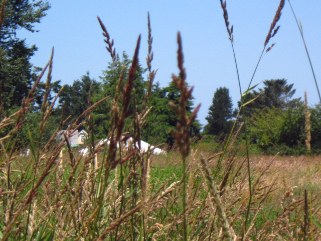Big Tent through the Tall Grass