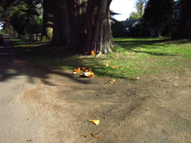 Pumpkin Remains