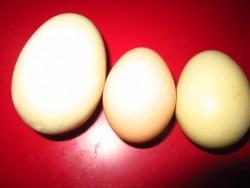 One Huge Egg