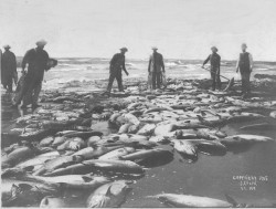 Fishing on Sand Island - CPHM Archive