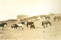 North of Joe John's Road, c.1946